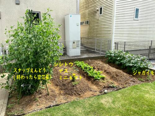 家庭菜園の記録(ガーデニング2020 ②)_e0031249_00315657.png