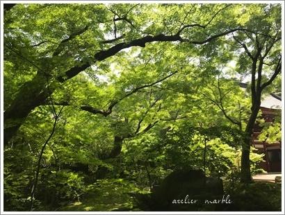初夏の風物詩_a0310054_12131743.jpg