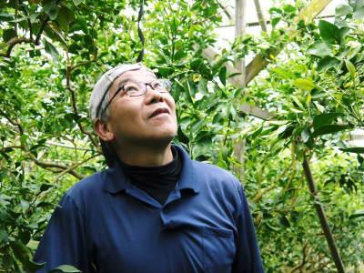 究極の柑橘「せとか」今年も完売御礼!そして次のせとかの栽培はすでに始まっています!花と花芽剪定の様子_a0254656_16413408.jpg