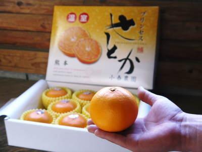 究極の柑橘「せとか」今年も完売御礼!そして次のせとかの栽培はすでに始まっています!花と花芽剪定の様子_a0254656_18552194.jpg