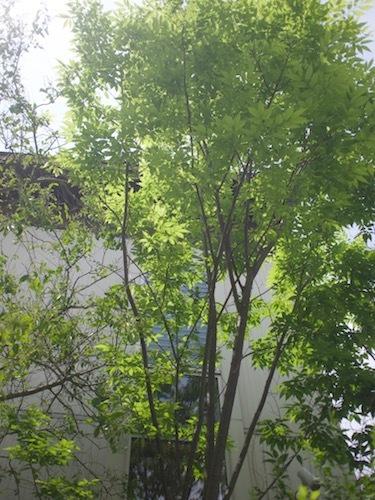 5月の庭より_a0335560_09405611.jpg
