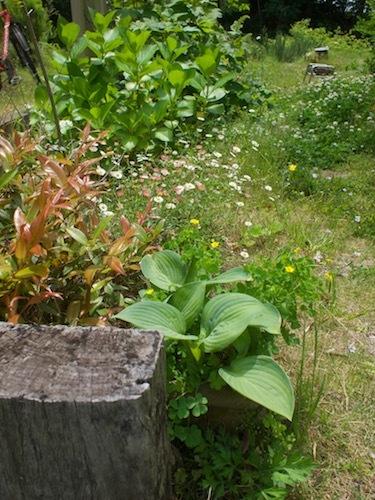 5月の庭より_a0335560_09413116.jpg
