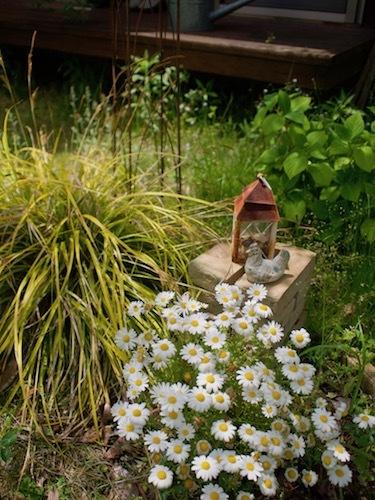 5月の庭より_a0335560_09420337.jpg