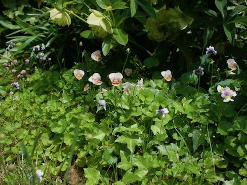 5月の庭より_a0335560_09422682.jpg