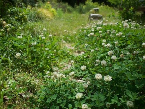 5月の庭より_a0335560_10034073.jpg