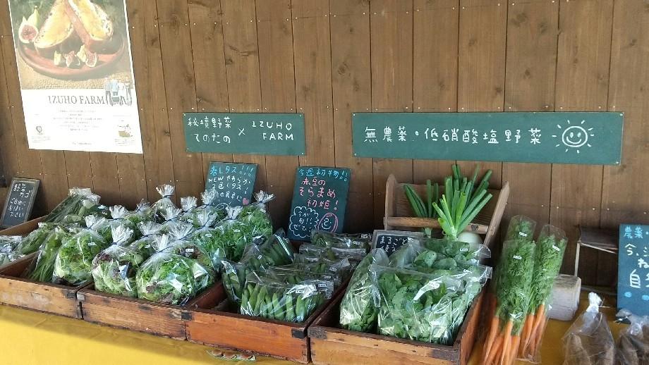 キラキラ野菜_b0339572_12224715.jpg