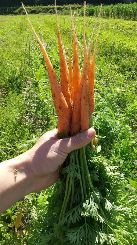 キラキラ野菜_b0339572_12224726.jpg