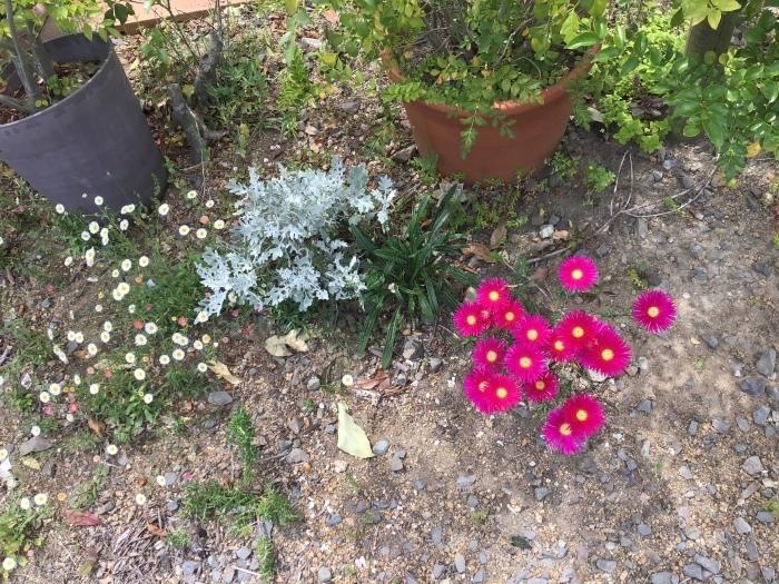庭の花々_b0087994_12431173.jpeg
