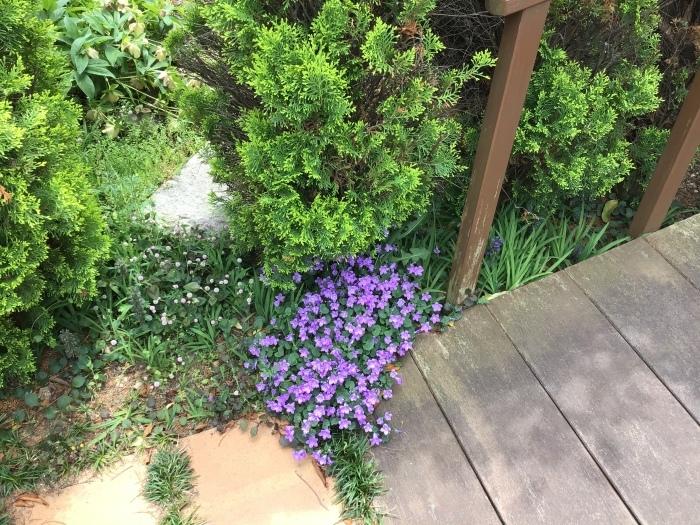 庭の花々_b0087994_12512461.jpeg