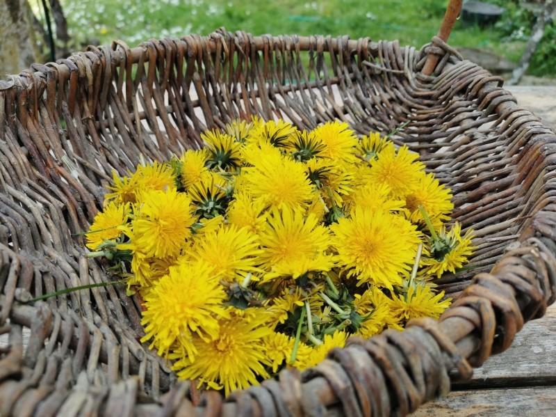 春のお日様の味、タンポポのジュレ_f0106597_18404948.jpg