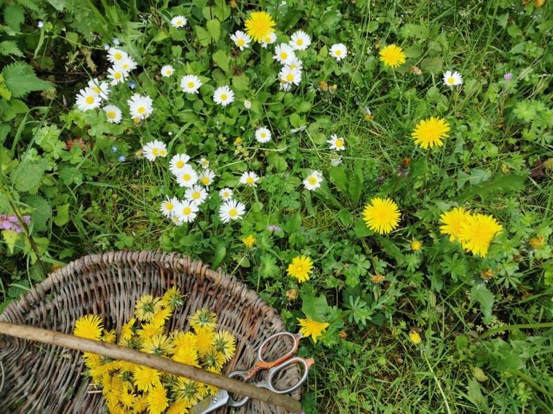 春のお日様の味、タンポポのジュレ_f0106597_18410790.jpg