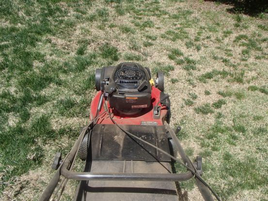 芝生の庭のサッチ除去_f0064906_16185106.jpg