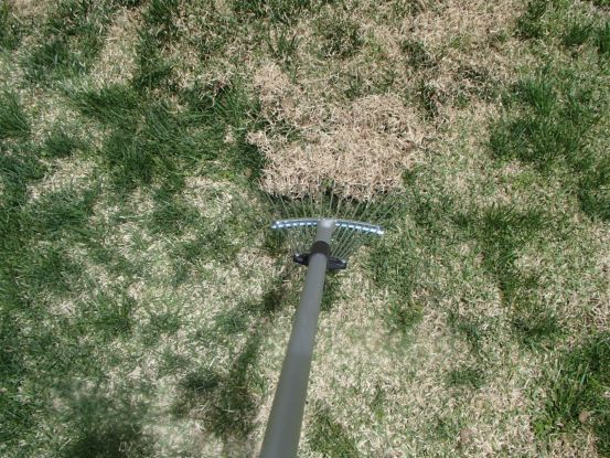 芝生の庭のサッチ除去_f0064906_16185524.jpg