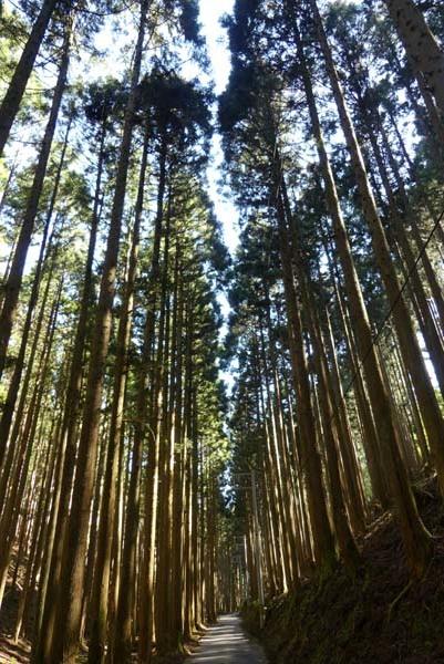 緑の北山 百井集落から百井別れへ_e0048413_20012717.jpg