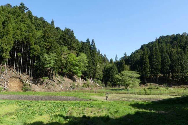 緑の北山 百井集落から百井別れへ_e0048413_20015046.jpg