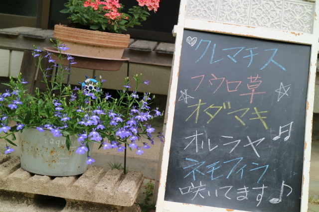 宿根草、山野草が咲くマイガーデン_e0397815_20214273.jpg
