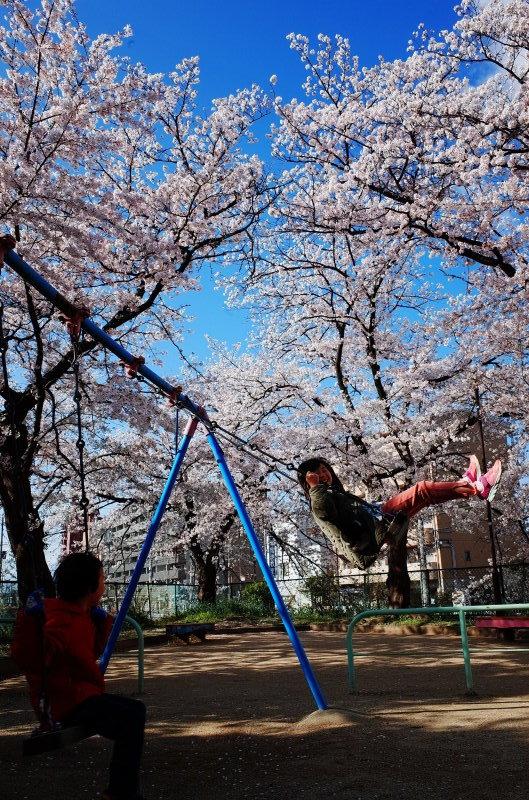 桜_e0360218_20003177.jpg