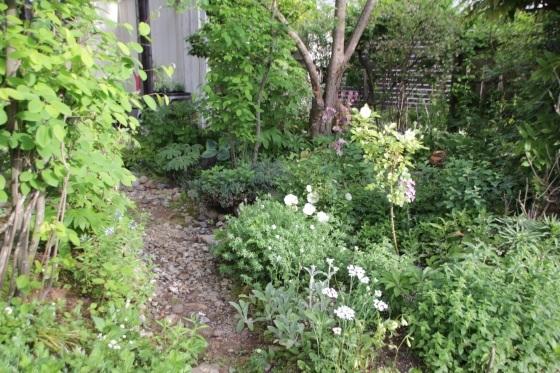 昨日の夕暮れ 今朝の庭_b0132338_07380938.jpeg