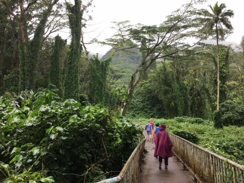ハワイの旅\'18~ 「マノアの滝」トレイル_e0326953_22170950.jpg