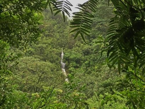 ハワイの旅\'18~ 「マノアの滝」トレイル_e0326953_22365609.jpg