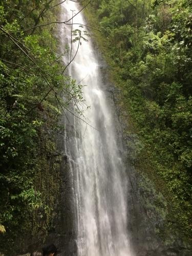 ハワイの旅\'18~ 「マノアの滝」トレイル_e0326953_22395145.jpg