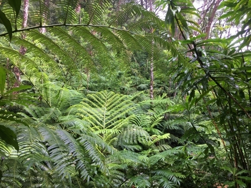 ハワイの旅\'18~ 「マノアの滝」トレイル_e0326953_22485559.jpg