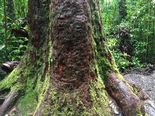 ハワイの旅\'18~ 「マノアの滝」トレイル_e0326953_22523519.jpg