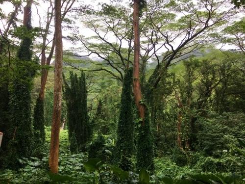 ハワイの旅\'18~ 「マノアの滝」トレイル_e0326953_22562377.jpg
