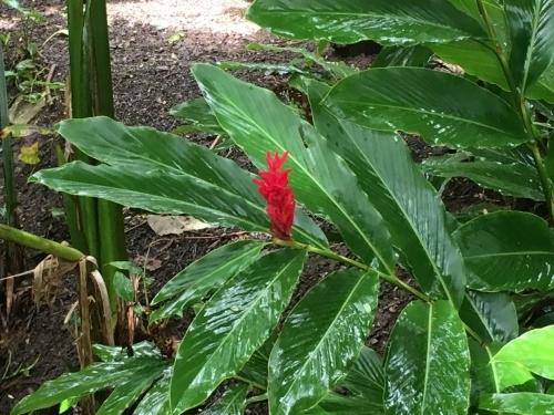 ハワイの旅\'18~ 「マノアの滝」トレイル_e0326953_23045782.jpg