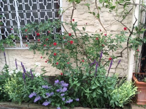オススメの植物たち/Hさんのお庭から_a0094959_21062630.jpg