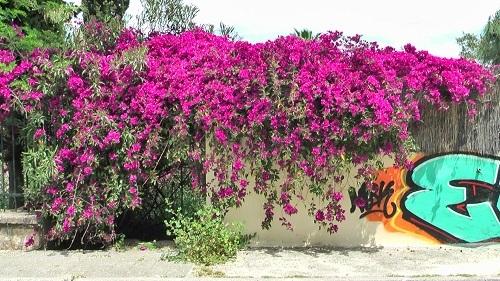 アクロポリス周辺の散歩_f0037264_05592278.jpg