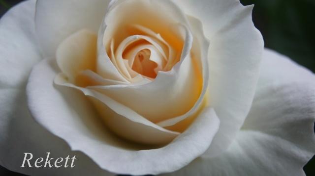 バラに癒されます~❤_f0029571_01441773.jpg