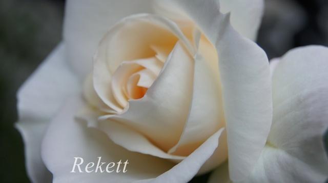 バラに癒されます~❤_f0029571_01443430.jpg