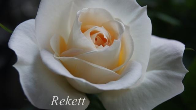 バラに癒されます~❤_f0029571_01450075.jpg