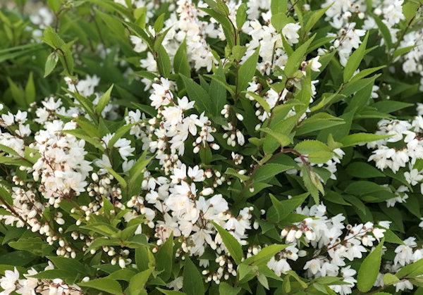 花便り4月&5月♪_a0143686_11475053.jpg