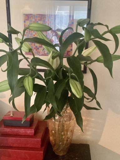 花にも一番似合う色がある_b0210699_00580435.jpeg