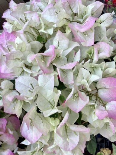 花にも一番似合う色がある_b0210699_01002465.jpeg