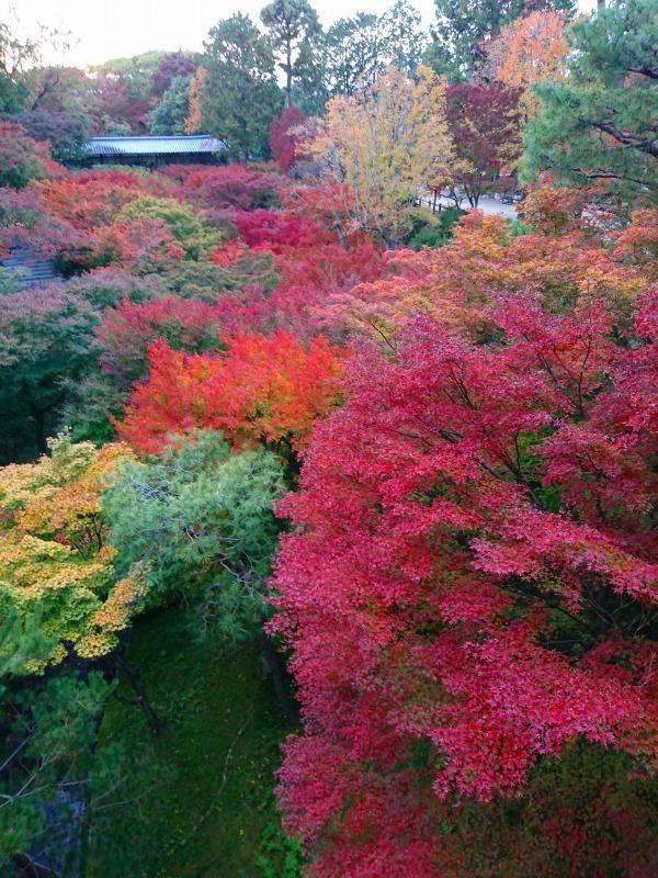 国内出張2019年11月-第一日目ー東福寺_c0153302_18360999.jpg
