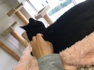 【犬猫・移動先募集】センター(支所)収容(6/26訪問)_f0242002_23242230.jpg