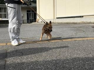 【犬猫・移動先募集】センター(支所)収容の飼主持込みの猫たち他(5/15訪問)_f0242002_23292070.jpg