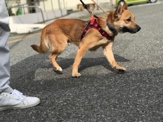 【犬猫・移動先募集】センター(支所)収容(6/26訪問)_f0242002_23294863.jpg