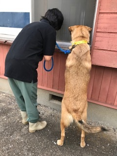 【犬猫・移動先募集】センター(支所)収容(6/26訪問)_f0242002_23305229.jpg