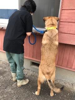 【犬猫・移動先募集】センター(支所)収容(6/26訪問)_f0242002_23310051.jpg