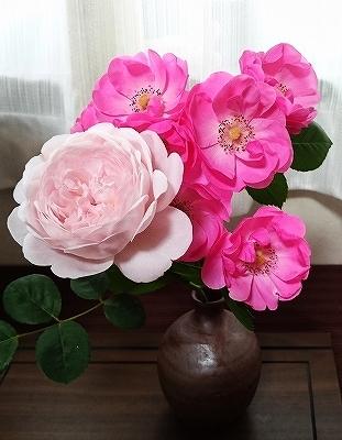 きれいに開花しない「アンジェラ」_e0289203_15285886.jpg