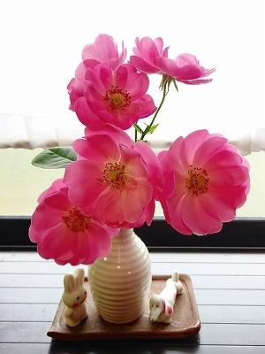 きれいに開花しない「アンジェラ」_e0289203_15290026.jpg