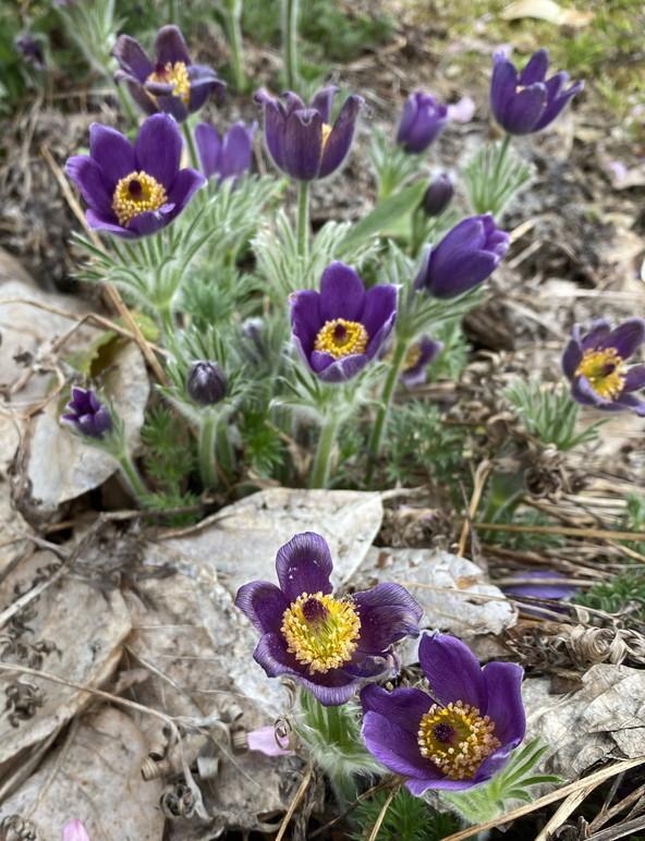 """2020年5月 『コロナに負けるな!花々も応援している』 May 2020 \""""Overcome COVID19! Flowers with Us!\""""_c0219616_18221692.jpg"""