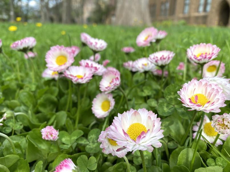 """2020年5月 『コロナに負けるな!花々も応援している』 May 2020 \""""Overcome COVID19! Flowers with Us!\""""_c0219616_18232157.jpg"""