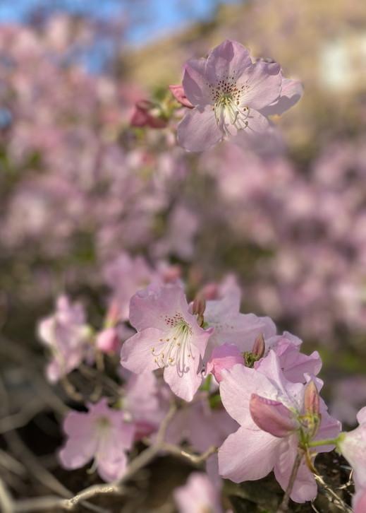 """2020年5月 『コロナに負けるな!花々も応援している』 May 2020 \""""Overcome COVID19! Flowers with Us!\""""_c0219616_18410605.jpg"""