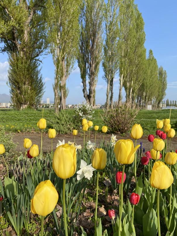 """2020年5月 『コロナに負けるな!花々も応援している』 May 2020 \""""Overcome COVID19! Flowers with Us!\""""_c0219616_18410652.jpg"""