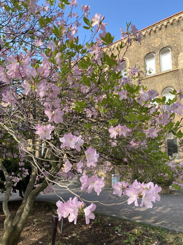 """2020年5月 『コロナに負けるな!花々も応援している』 May 2020 \""""Overcome COVID19! Flowers with Us!\""""_c0219616_18421381.jpg"""